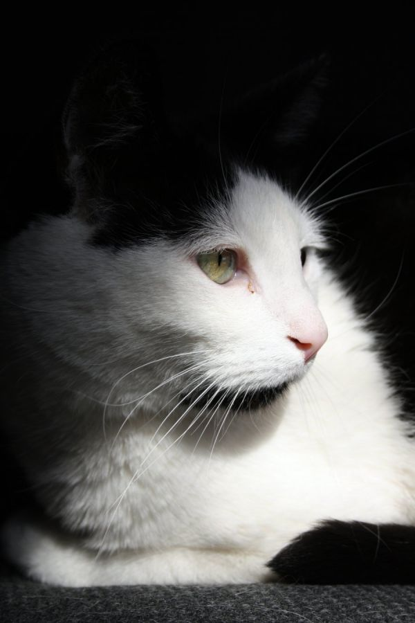 Unser Kater Isi